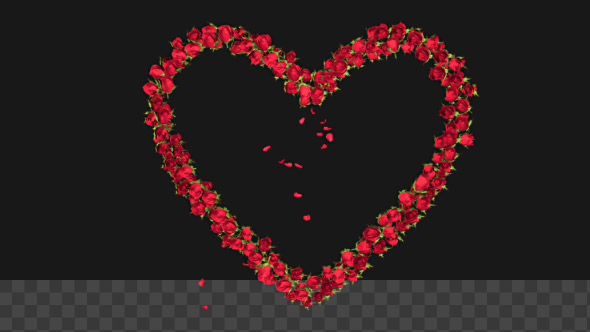 VideoHive Red Rose Heart Symbol Formation with Transparency 19302090