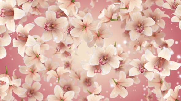 VideoHive Orchid Flowers 19304574