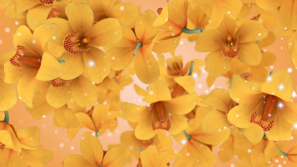 VideoHive Flowers Orchid Yellow 19307690