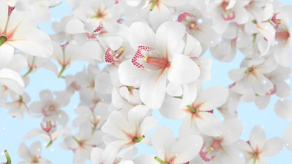 VideoHive Flowers Orchid White 19310784