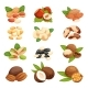 Set of Nuts Vector Illustration