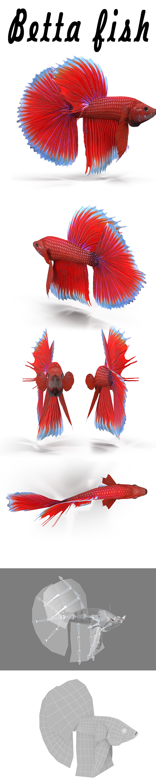 Betta Fish - 3DOcean Item for Sale
