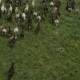 Goats Going on a Pasture Land