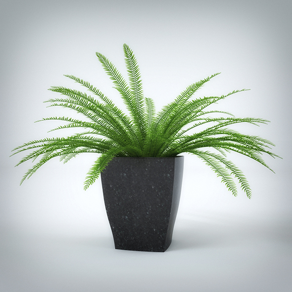 Interior Plant (3dsmax + Vray Ready) - 3DOcean Item for Sale