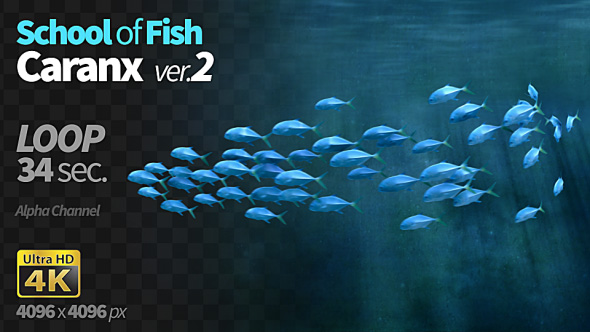 VideoHive School of Fish Caranx-2 19322758