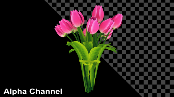 VideoHive Flowers Tulips Bouquet 19324116