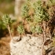 Wild Succulent Plant on the Rock