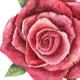 Watercolour Hand Drawn Roses