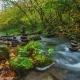 Beautiful Creek Flow