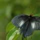Butterfly on Leaf in the Tropical Rain Forest. Kuala-Lumpur Malaysia