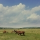 Wild Horses on Rural Pasture Land
