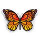 Orange Butterfly Monarch