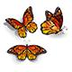 Set of Orange Butterflies Monarchs