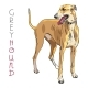 Vector Greyhound Dog Breed