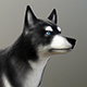 Siberian Husky Dog - lowpoly 3d model