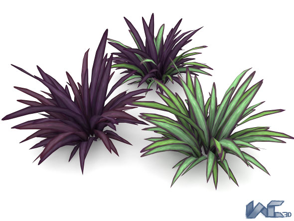 Babiana Plant - 3DOcean Item for Sale