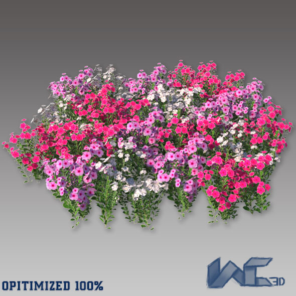 Catharanthus Roseus - 3DOcean Item for Sale