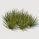 Euphorbia Larica
