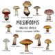 Download Vector Mushrooms of Boletus Family Including Leccinum and Suillus