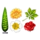 Download Vector Different Types of Flower