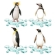 Different Types of Penguins on Ice