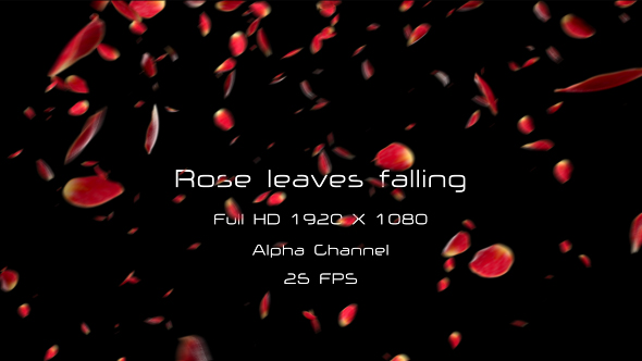 VideoHive Rose Leaves 19402834