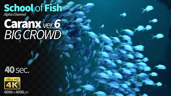 VideoHive School of Fish Caranx-6 19411376