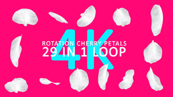 VideoHive 4K Rotation Cherry Petals V1 29 in 1 19415755