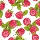Download Vector Raspberry Seamless Pattern