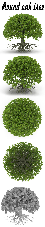 Round oak tree - 3DOcean Item for Sale