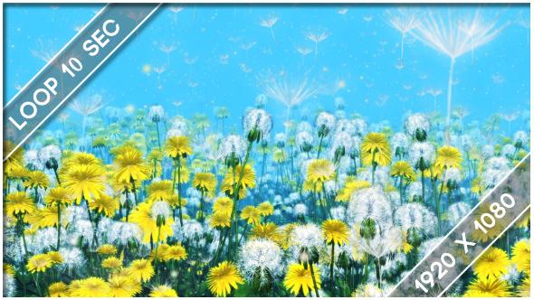 VideoHive Flowers Dandelions Meadow 3 19430294