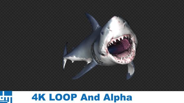 VideoHive Shark Attack V6 19437935