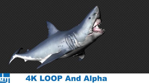 VideoHive Shark Attack V7 19437941