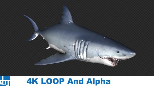 VideoHive Shark Attack V9 19437947