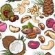 Seamless Pattern of Walnut, Coconut, Cashew, Kola