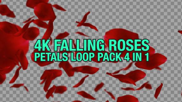 VideoHive 4K Rose Falling Pack 4 n 1 19441595