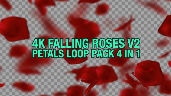 VideoHive 4K Rose Falling Pack V2 4 n 1 19441652