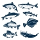 Sea and River Fishes Vector Isolated Icons
