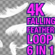 4K Falling Feather Pack 6 in 1