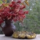 Birds Peck Seeds on a Wooden Table in the Garden. Standing Next To a Bouquet with Viburnum Berries