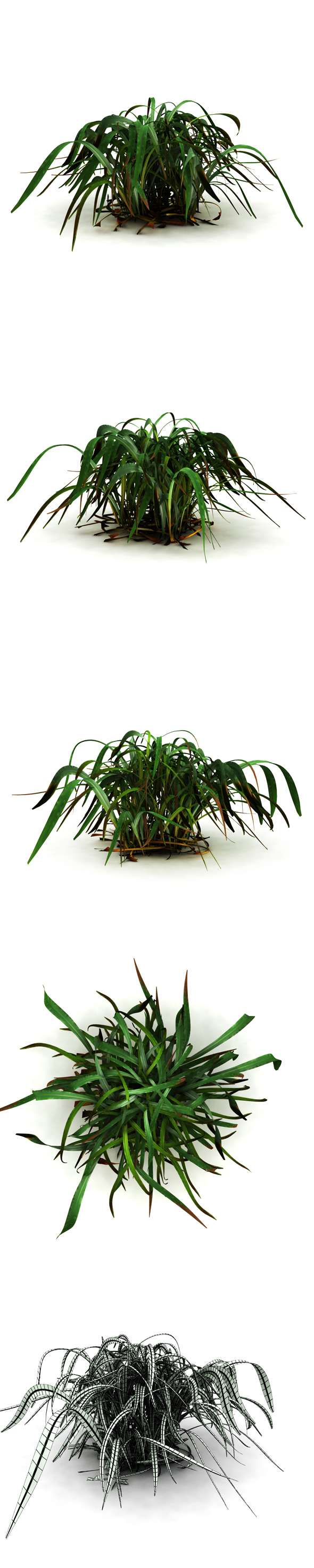 Marsh grass - 3DOcean Item for Sale