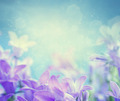 Campanula background - PhotoDune Item for Sale
