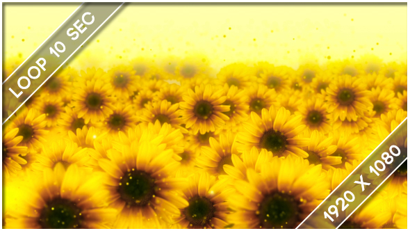 VideoHive Flowers Sunflower Show 3 19458988