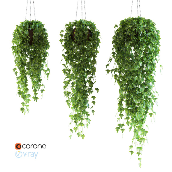 Set of 3 models Ivy in pots hanging on a chain - 3DOcean Item for Sale