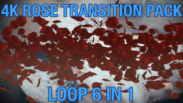 VideoHive 4K Rose Transition Pack 6 in 1 19466460