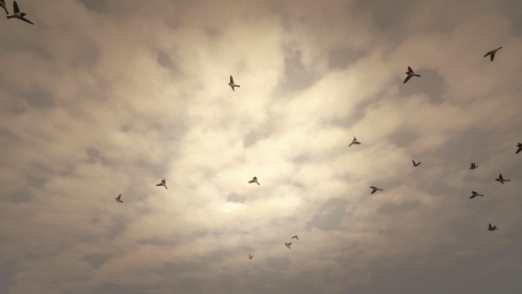 VideoHive Birds Flying Background 19467585