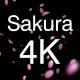 3 Sakura Petals 4K Pack