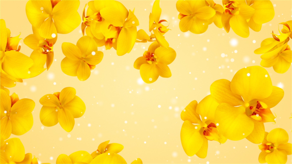 VideoHive Flowers Orchid Yellow 19474519