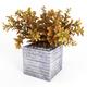 Croton tree