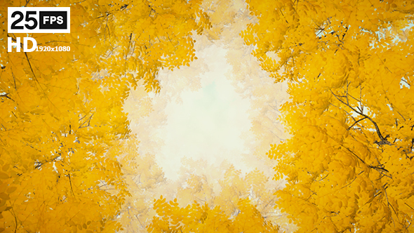 VideoHive Autumn 08 19476073
